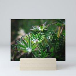 Lupines in Spring 3 Mini Art Print
