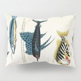 Antique Fish Louis Renard Vintage Scientific Illustration Species Labeled Diagram Encyclopedia Lithograph Pillow Sham