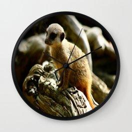 Meerkat Baby Wall Clock