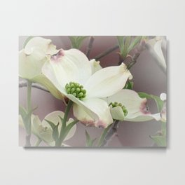Dogwood Flower Modern Farmhouse Cottage Chic Country Art A447 Metal Print
