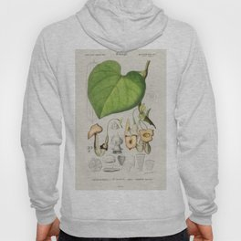 Pipevine (Dutchmans pipe) illustrated by Charles Dessalines D Orbigny (1806-1876) Hoody