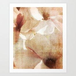 Magnolia memory Art Print