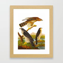 Goshawk John James Audubon Vintage Scientific Bird Illustration Framed Art Print