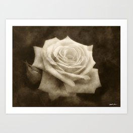 Pink Roses in Anzures 4 Antiqued Art Print
