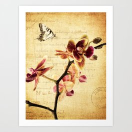 Orchid Flower Butterfly Modern French Country Cottage Art A183 Art Print