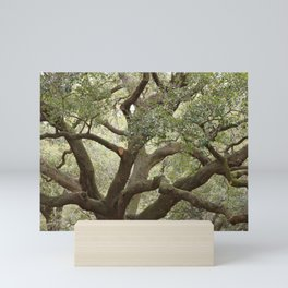 Live Oak Mini Art Print