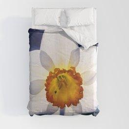 the genus of narcissus Comforters