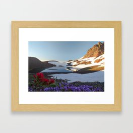 Alpine Wildflowers Framed Art Print