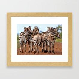 Zebras - Africa wildlife Framed Art Print