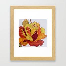 Rose shining her last light Framed Art Print