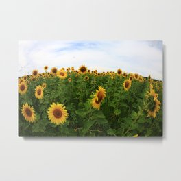Sonnenblume Metal Print