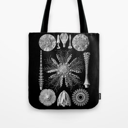 Sand Dollars (Echinidea) by Ernst Haeckel Tote Bag