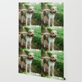 Fetch (Color) Wallpaper