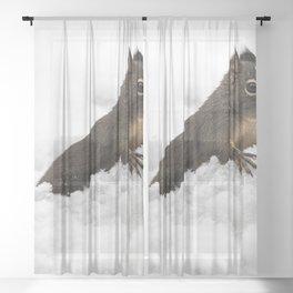 Winter Squirrel II -  Cute Wildlife Animals Nature Photography Sheer Curtain