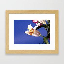 flowers lillies Framed Art Print