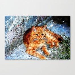 Tiger little cousin Canvas Print
