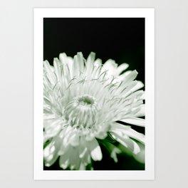 Flower beauty in nature Art Print