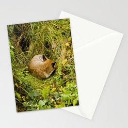 Mr Fox's afternoon nap Stationery Cards