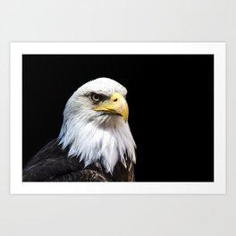 Majestuous Bald Eagle Art Print