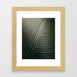 Calathea Lutea Framed Art Print