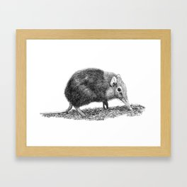 Black Shrew Framed Art Print