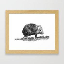 Black Shrew Framed Art Print