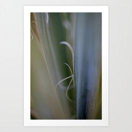 California Cactus Up Close Art Print