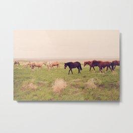 Badlands Horses, South Dakota Metal Print