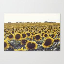 SUNFLOWER_5 Canvas Print