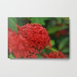 Red Ixora Metal Print