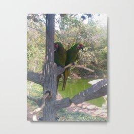Shy Parrot Metal Print