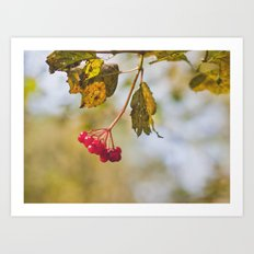 Berry Bokeh Fine Art Photographic Winter Print  Art Print