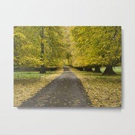 Lime tree avenue Metal Print