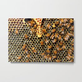 Sweet Honey Harvest Metal Print