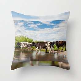 Herd of cows walking across pool Throw Pillow