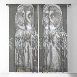 The Great Grey Owl Sheer Curtain