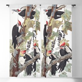 Pileated woodpecker edit, Birds of America, Audubon Plate 111 Blackout Curtain