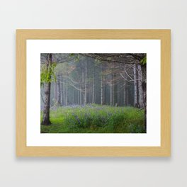 Lupines At The Forest's Edge Framed Art Print
