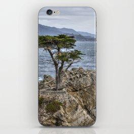 A Cypress Tree iPhone Skin