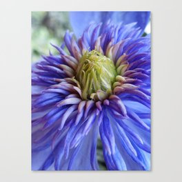 Clematis Canvas Print