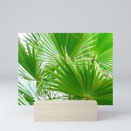 Fan Palm Leaves Mini Art Print