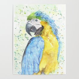 "Watercolor Painting of Picture ""Macaw"" Poster"