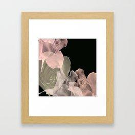Blush Abstract Roses on Blackground Framed Art Print