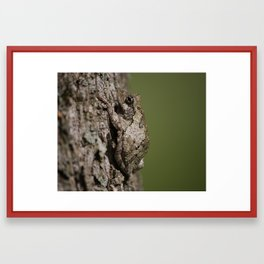 Gray Tree Frog Framed Art Print