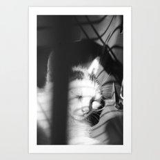 Bliss Kitten 5 Art Print