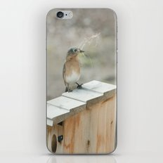 Build Your Nest iPhone & iPod Skin