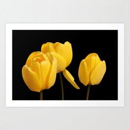 3 Yellow Tulips Art Print