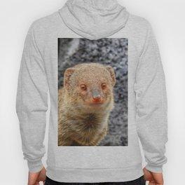 Mongoose Hoody