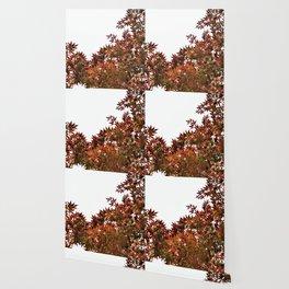 Changing of Seasons Wallpaper