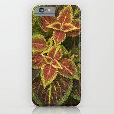Coleo Coleus Slim Case iPhone 6s